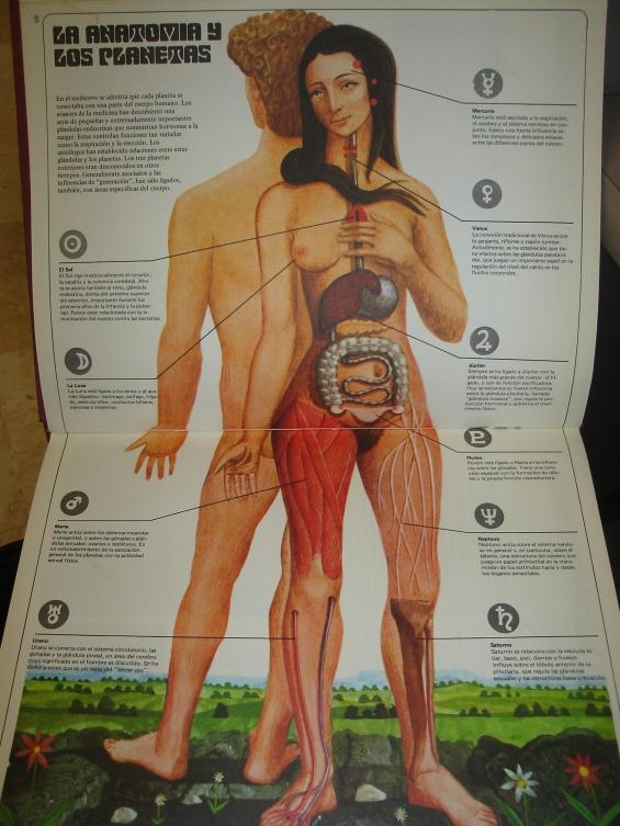 La anatomía y los planetas