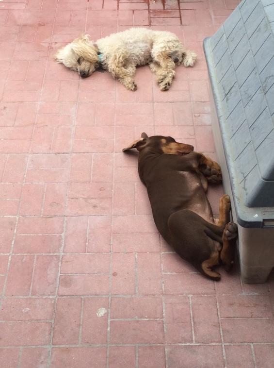 Bebitos duermen