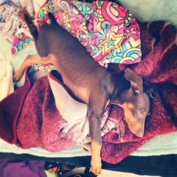 Morenito sleeps