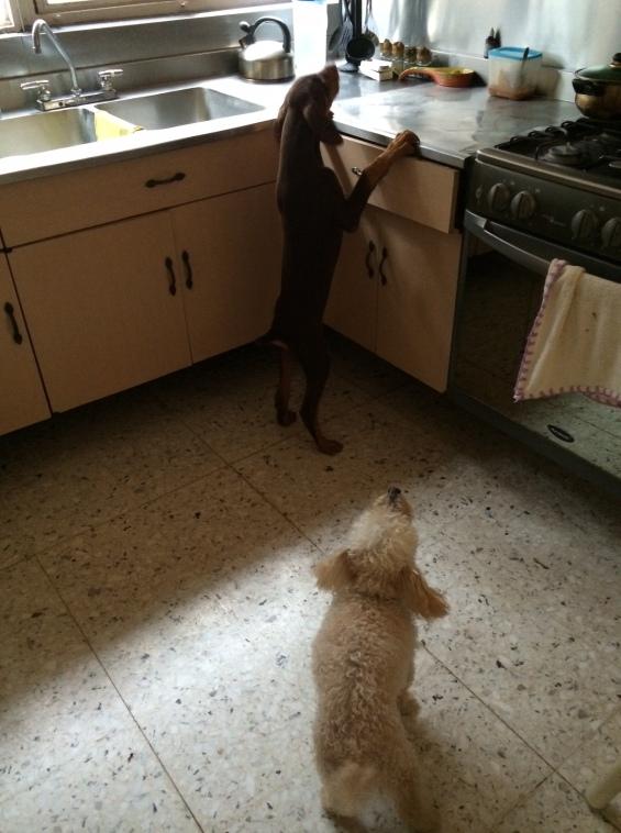 Escena II: Güero lo descubre en la travesura y le grita: Ya te vi, perro hermano, le voy a decir a mi mamá!!!